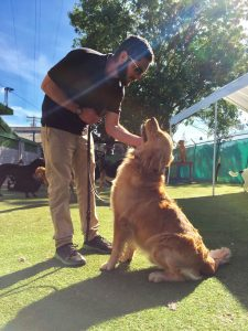 encinitas dog training