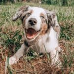 Summer Dog Grooming: 6 Tips for Keeping Your Dog Cool and Comfortable
