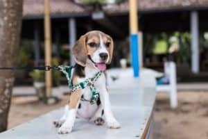 How Dog Daycare Can Benefit Your Pup