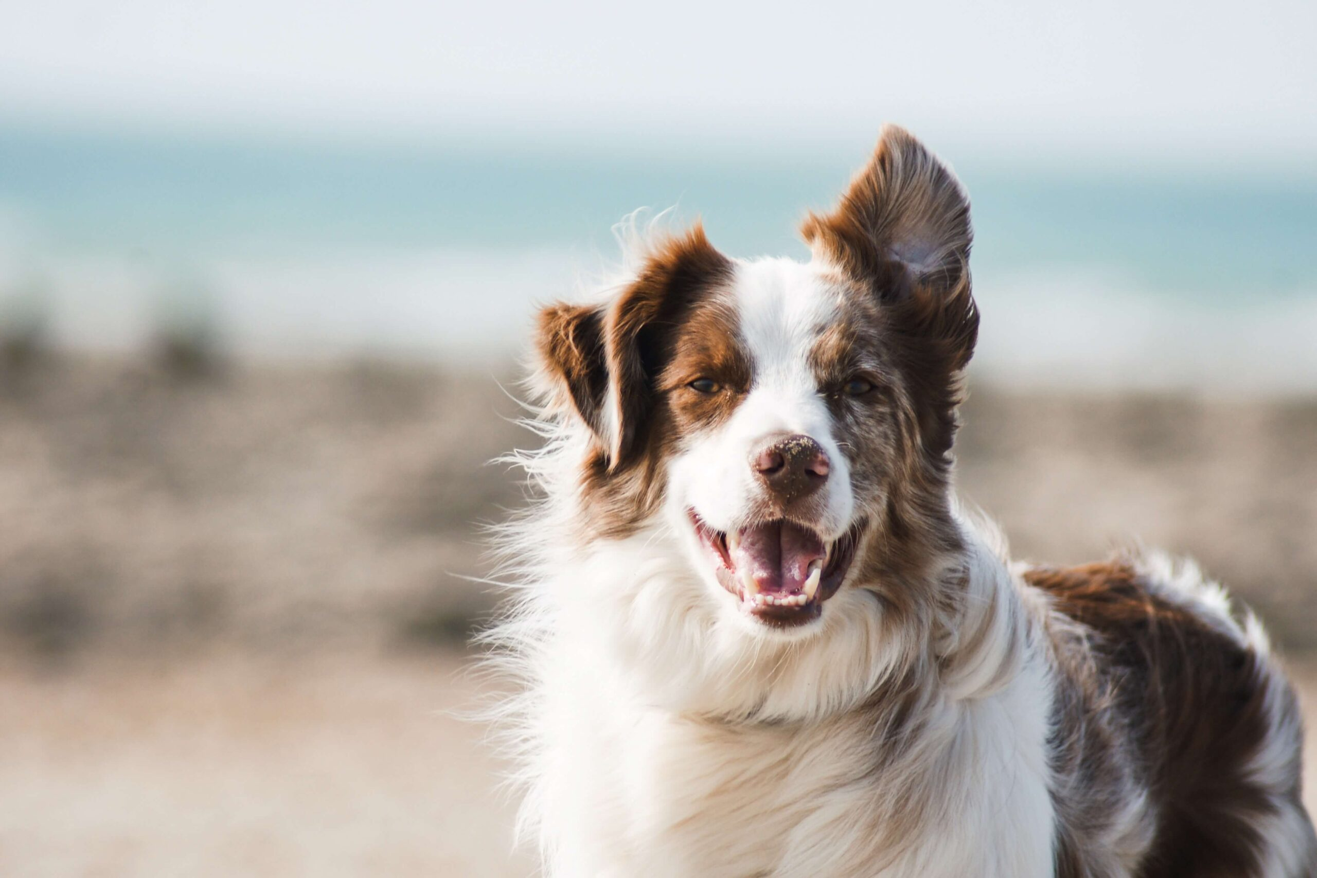 Why Should I Choose a Dog Boarding Facility Instead of My Veterinarian?