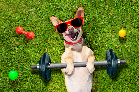 Healthy Habits for Lodging Pets