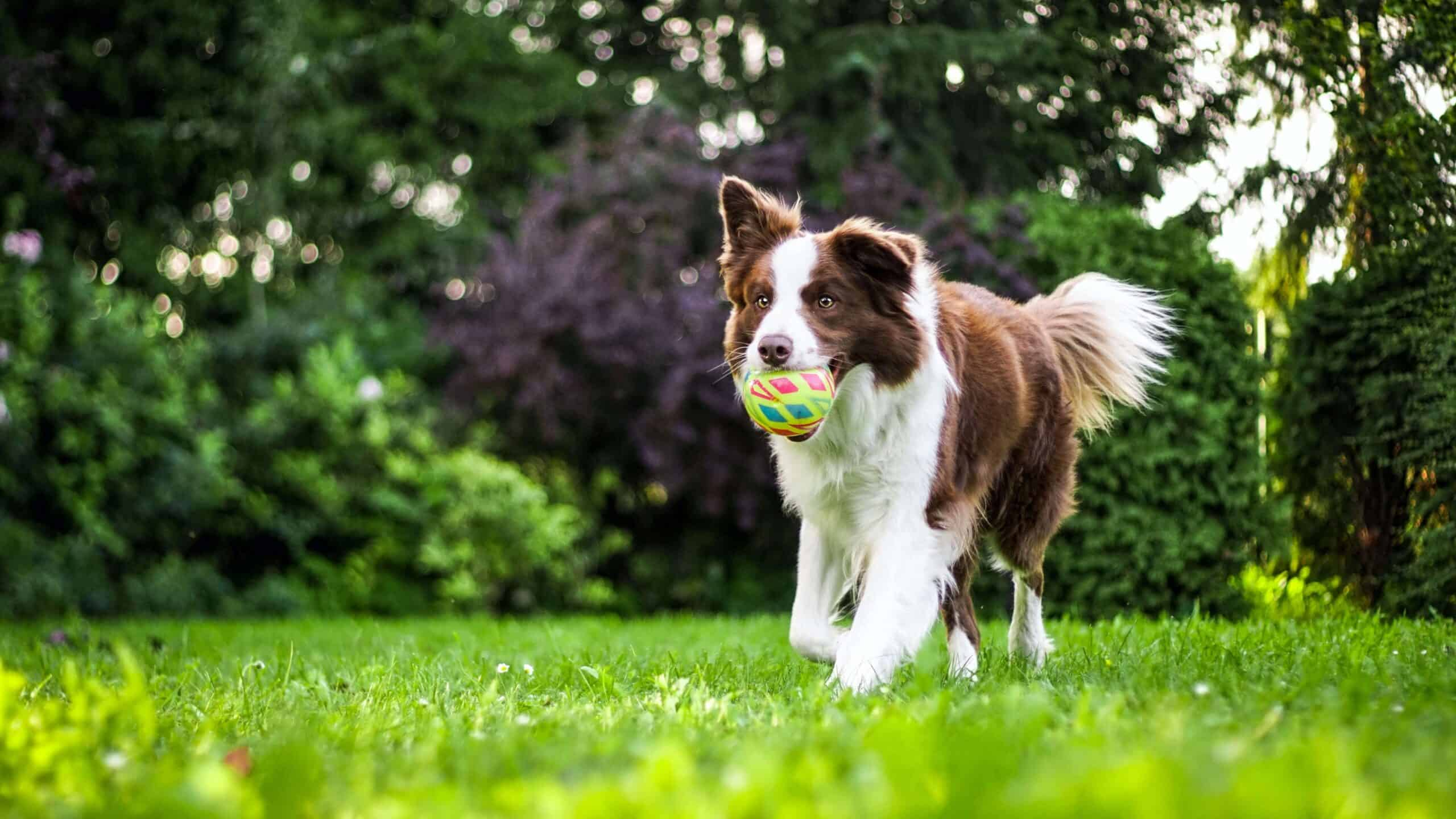 Keep Your Dog Healthy With Exercise During Boarding