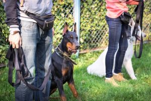 Dog Training on a Busy Schedule