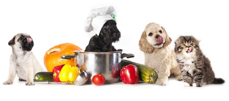 Five Dog Treats to Avoid (and Their Alternatives)