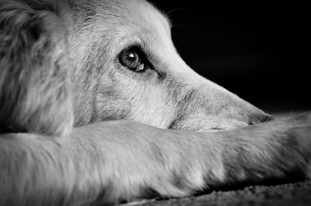 Recognizing Anxiety in Dogs