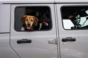 Traveling With Dogs: What You Should Know