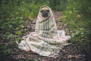 Spring cleaning? Donate your clean, used towels & blankets to animal shelters!