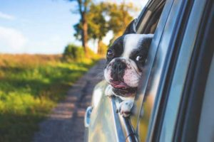 road trip with your pet