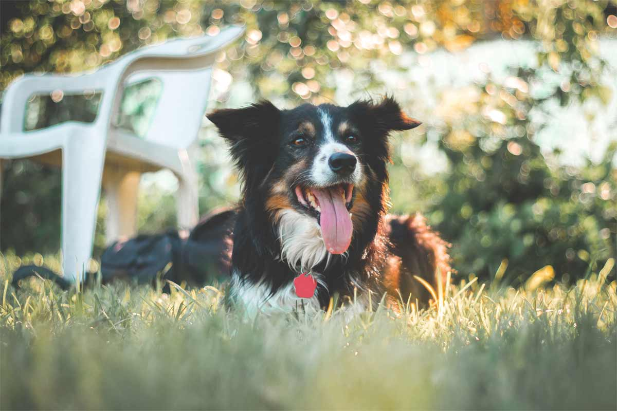 Pets and Heat Safety