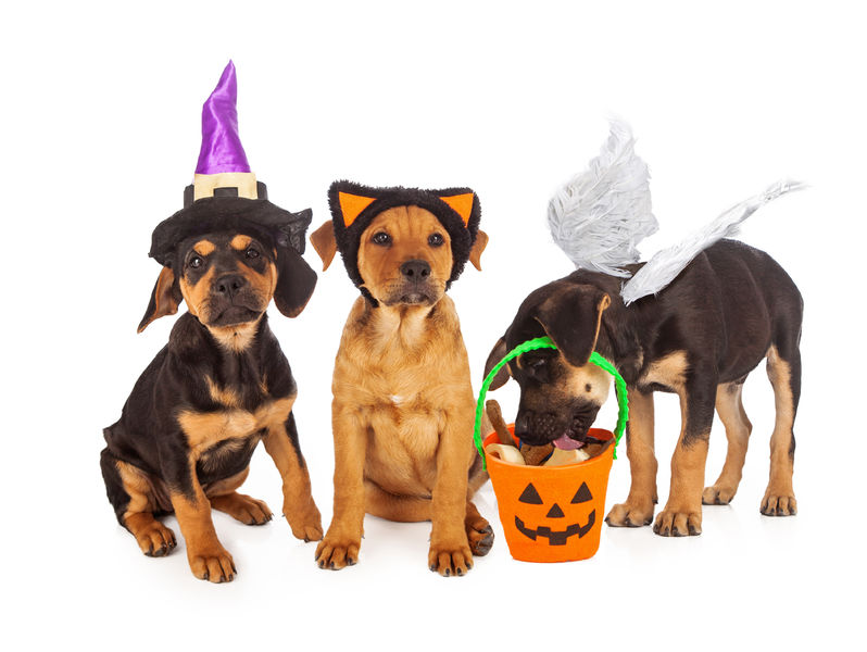 puppies wearing halloween costumes