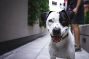 The Benefits of Dog Boarding