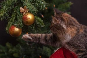cat playing with Christmas decoration
