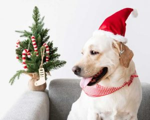 safe gifts for pets
