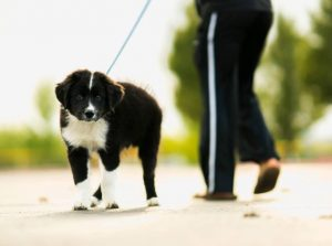 8 Simple Tips to Becoming a Dog Walking Pro