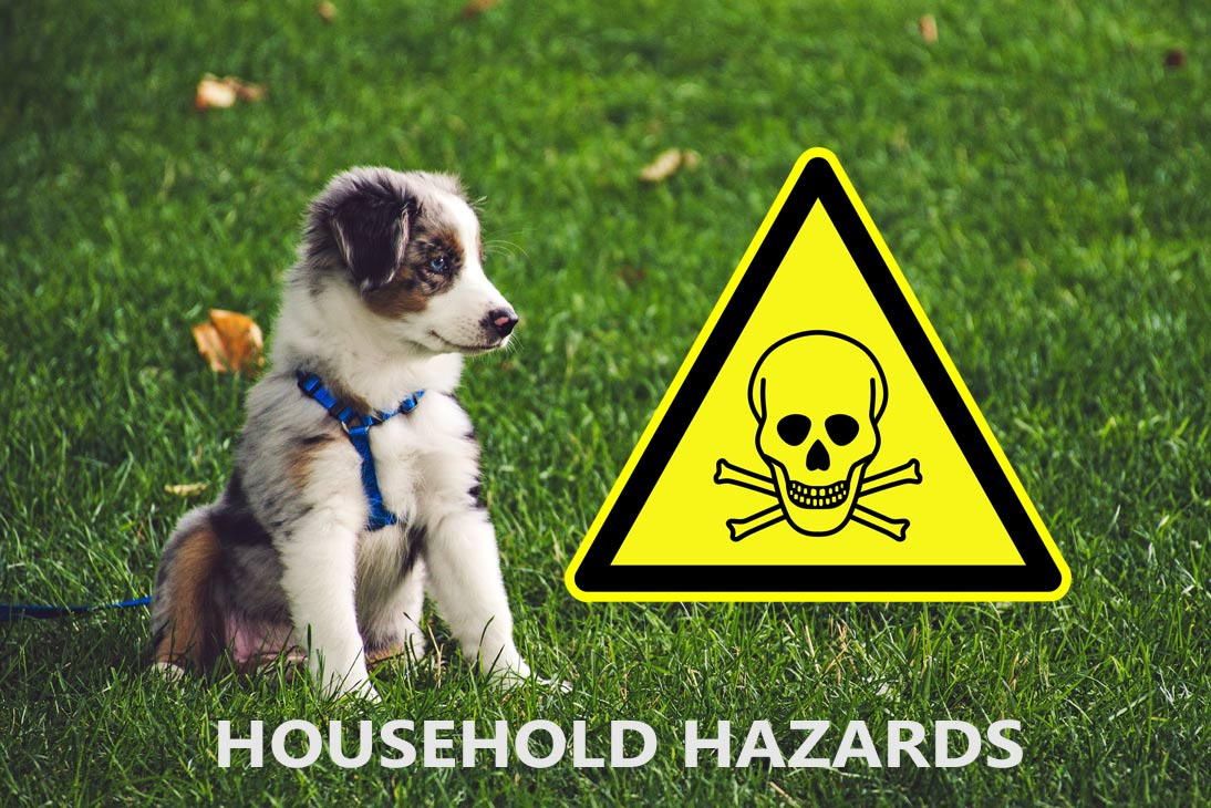 Common Household Hazards that Can Harm Your Pets