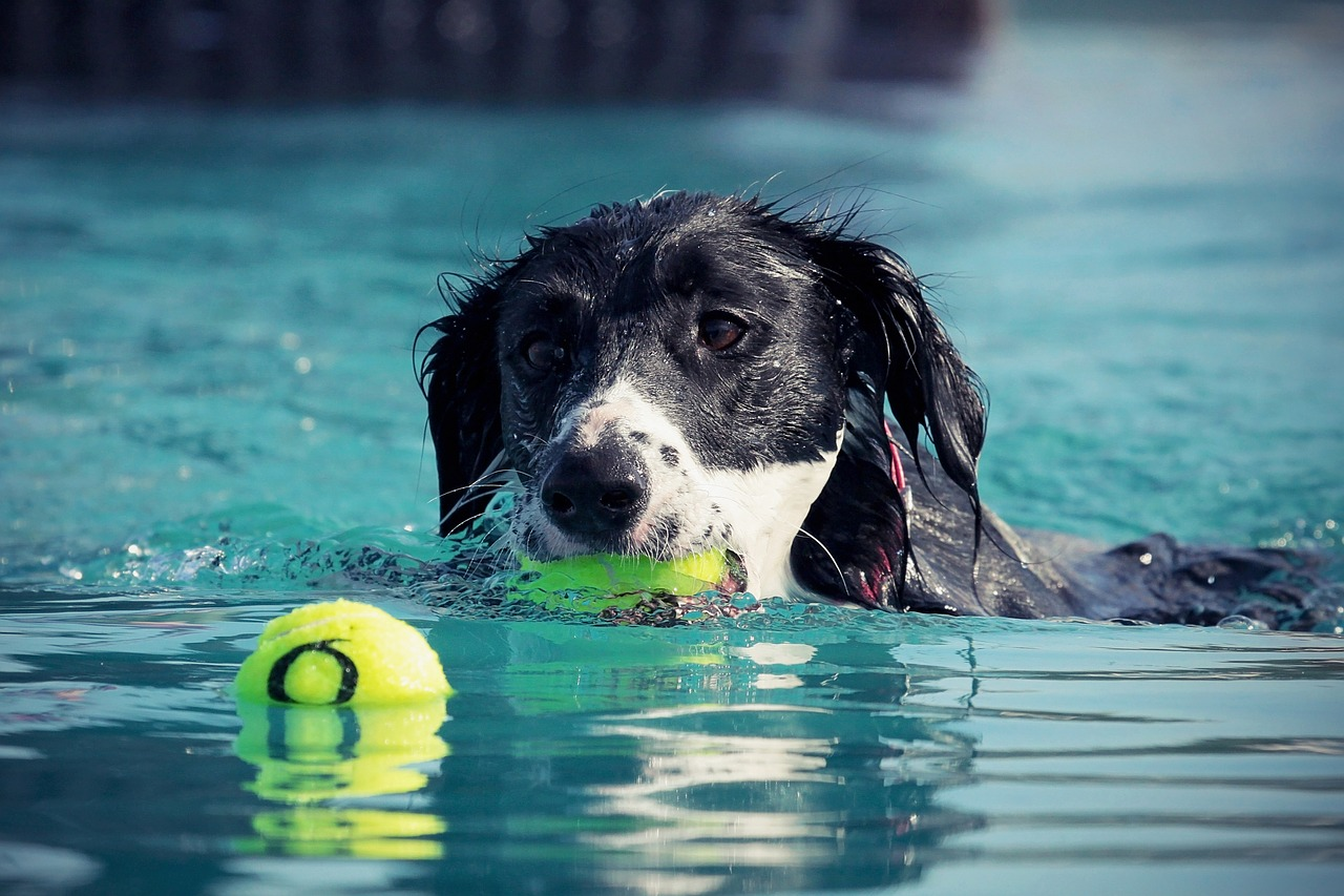 Swimming Safety Tips for Your Dog