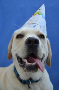 Celebrating Your Dog's Birthday: the Do's and Don'ts