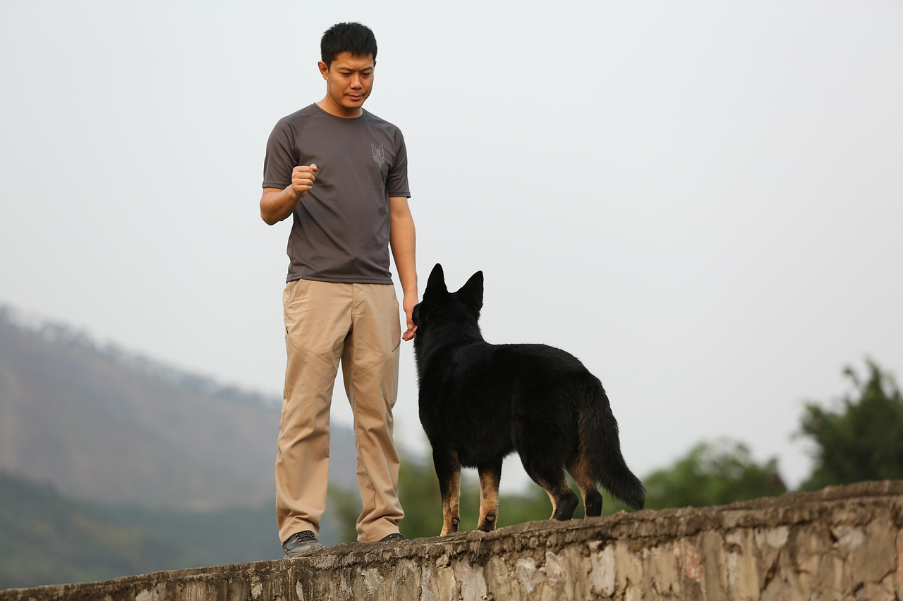 Positive Reinforcement Training: How to Train Your Dog