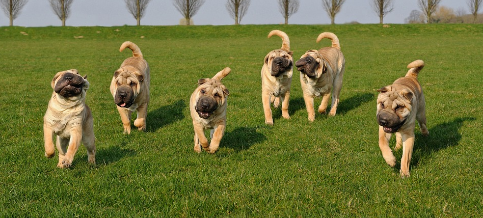 Exercising Your Dog in Summer: An Ultimate Guide