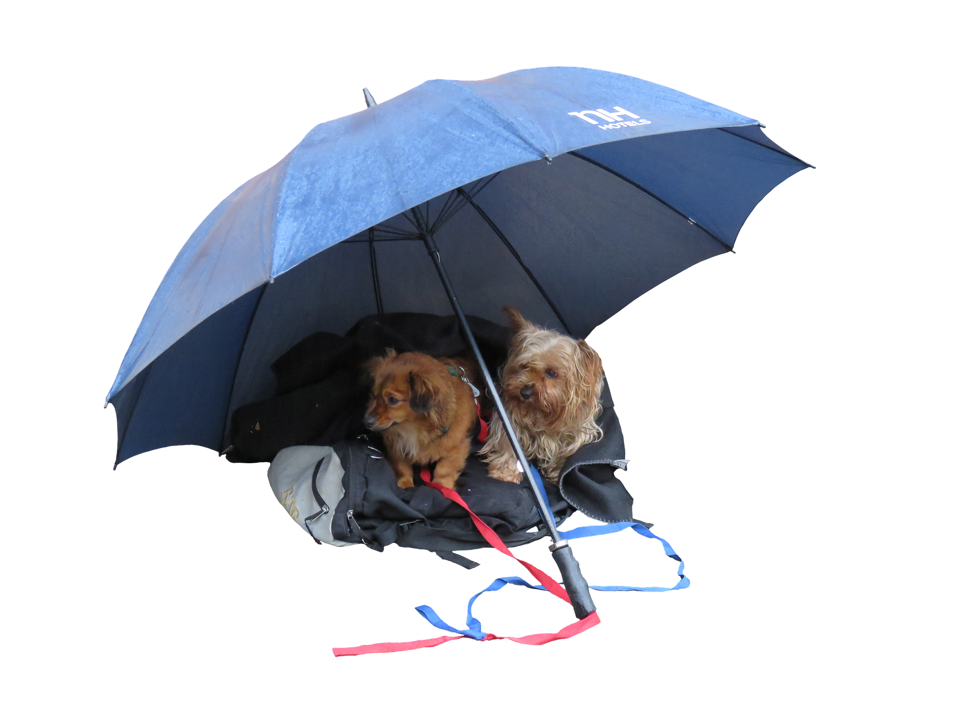 Taking Care of Your Dog in Rainy Season