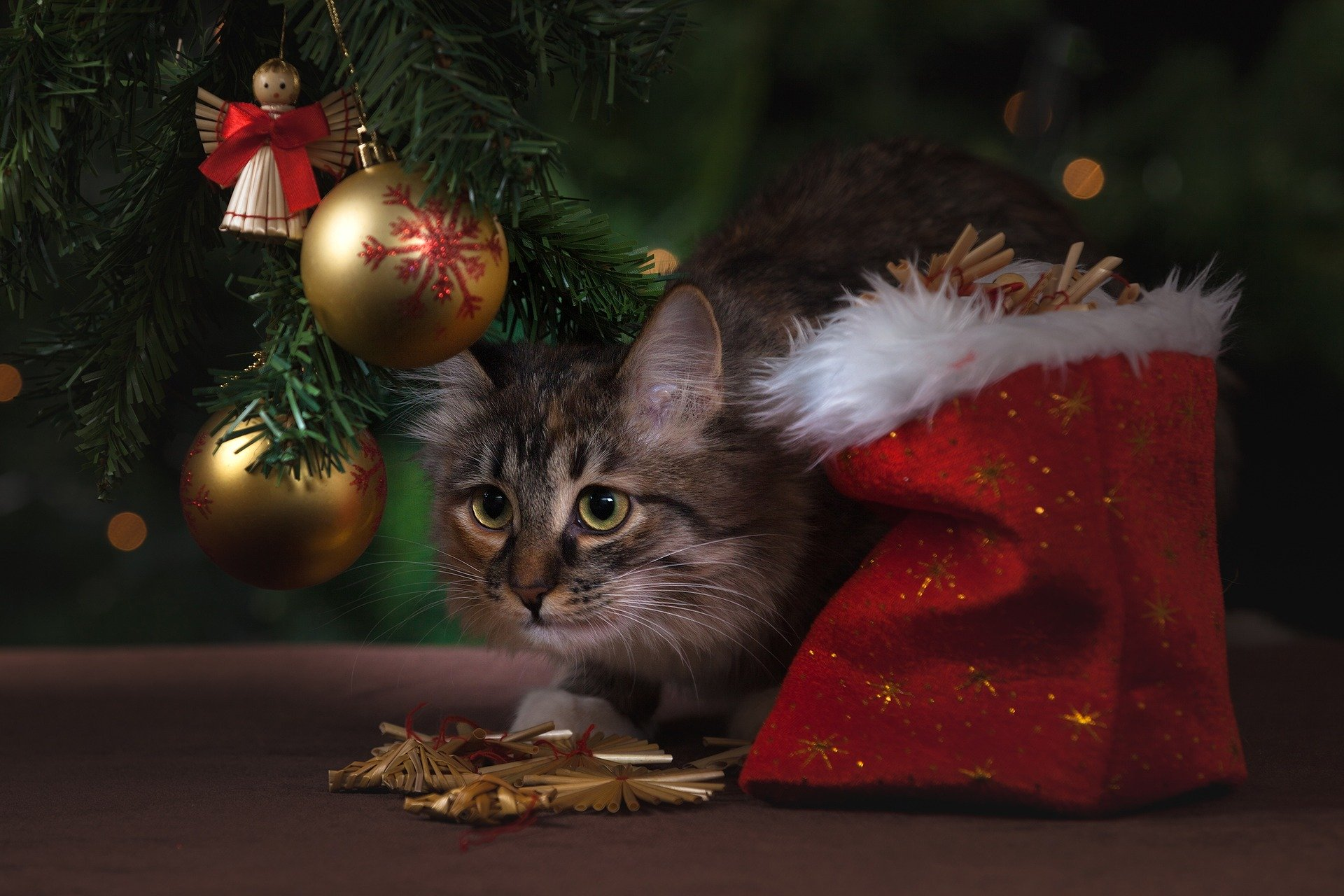 Winter Holiday Plants That are Hazardous for Pets