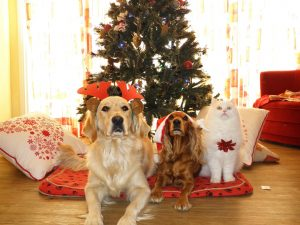 8 Pet Safety Tips for the Holidays