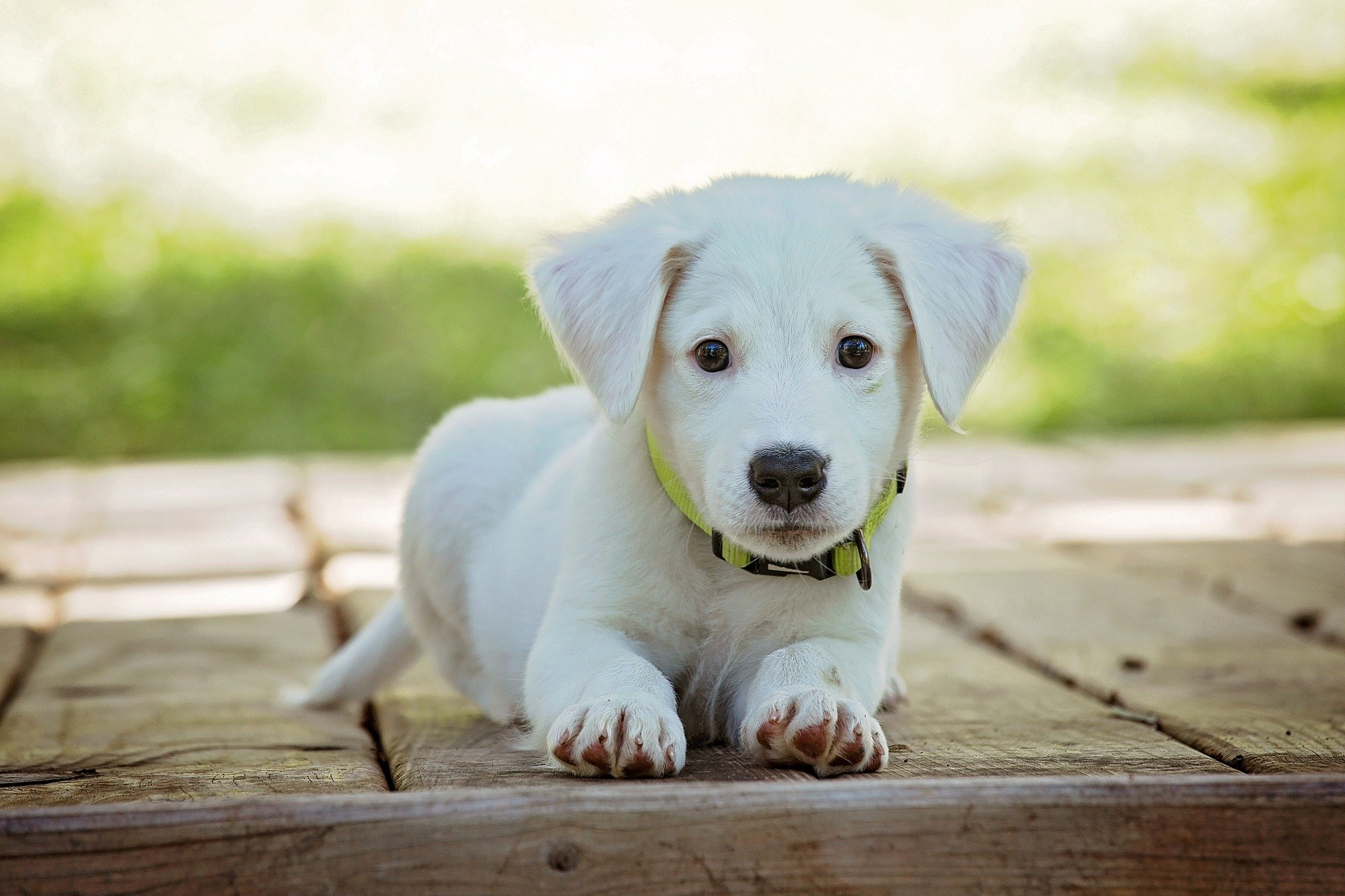 10 Steps to Puppy Proofing Your Home