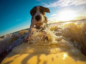 Sun Safety and Summer Grooming for Fido