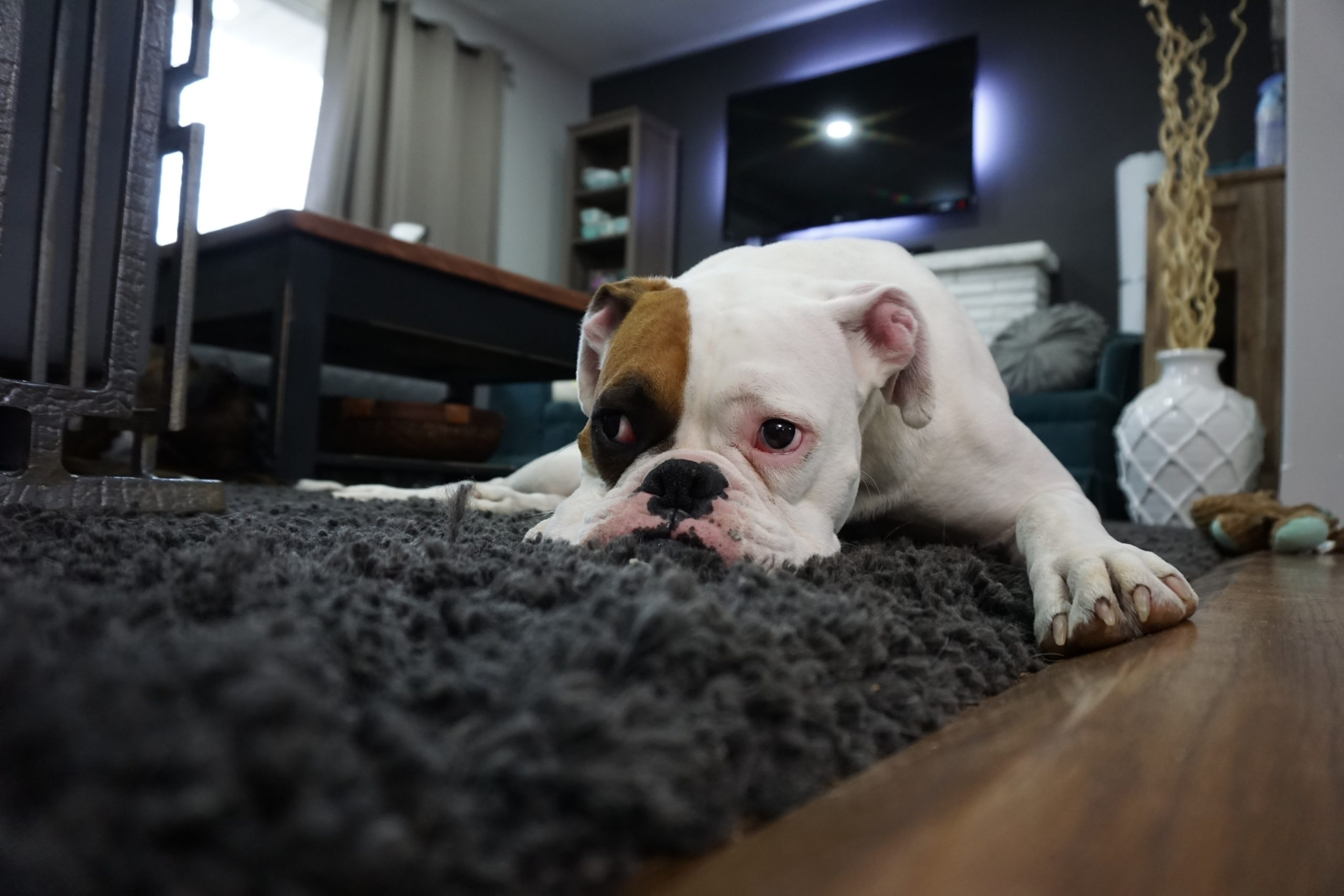 Household Items That Could Be Triggering Your Pet's Allergies