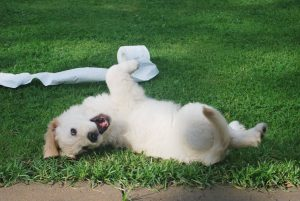 Puppy Training – 5 Tips for Success
