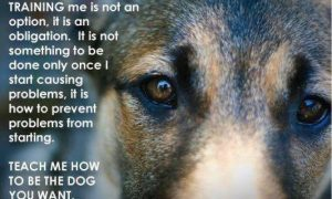A Great Dog Message