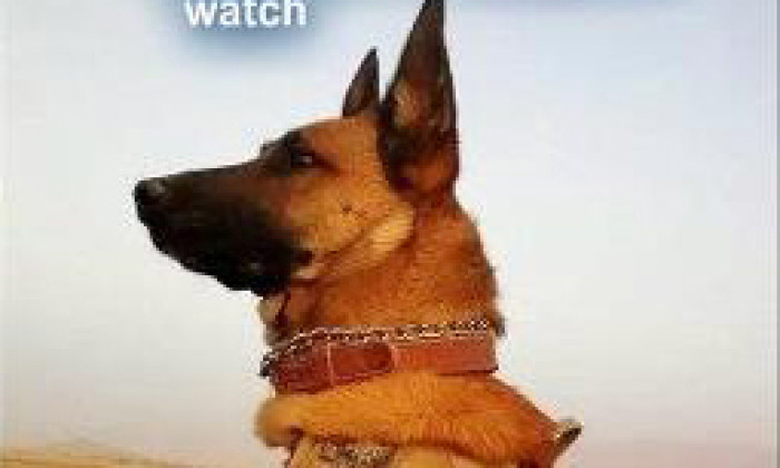 A Great Military Working Dog Photo and Tribute