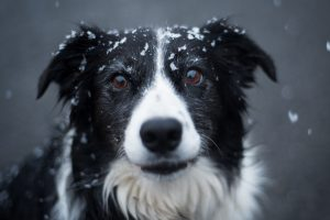 Tips for Grooming Your Dog During Winter