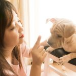 Tips for Continuing Dog Training