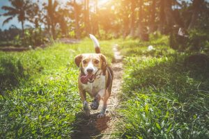 Training Tips: Teaching Your Puppy the Recall Command