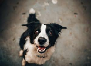 The Importance of Dog Training During Boarding