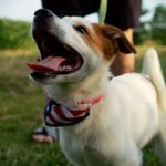 Tips for a Fun and Safe 4th of July With Your Dog