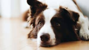 Myths & Facts About Dog Boarding Kennels