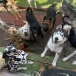 5 Ways Doggie Daycare With a Busy Play Area Benefits Your Dog